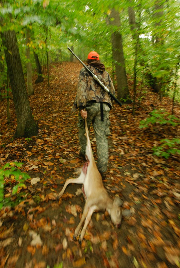 A hunter drags a white tail deer through the woods.