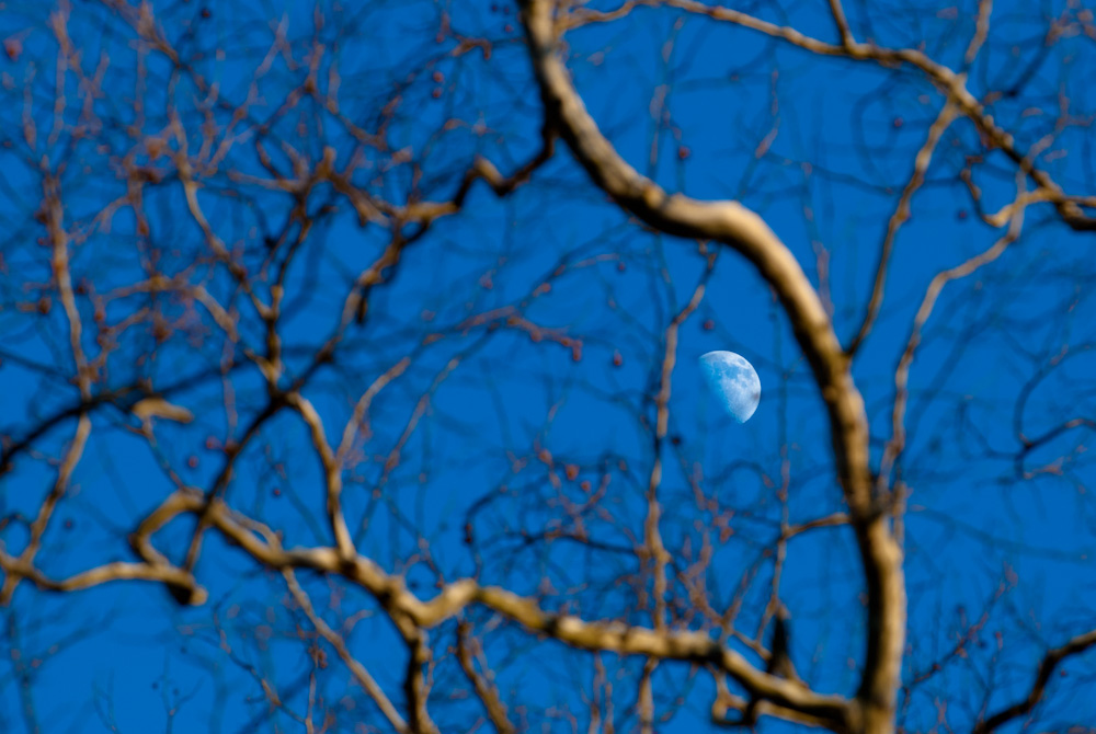 The moon as viewed through the gnarled branches of a birch tree along the C&O Canal in Maryland.