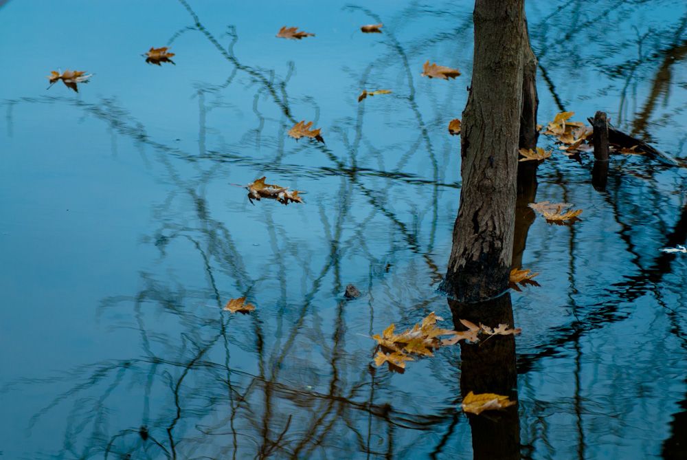 Autumn leaves on the Potomac River.