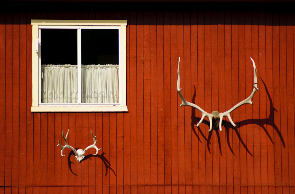 Antlers on side of barn, Jackson WY
