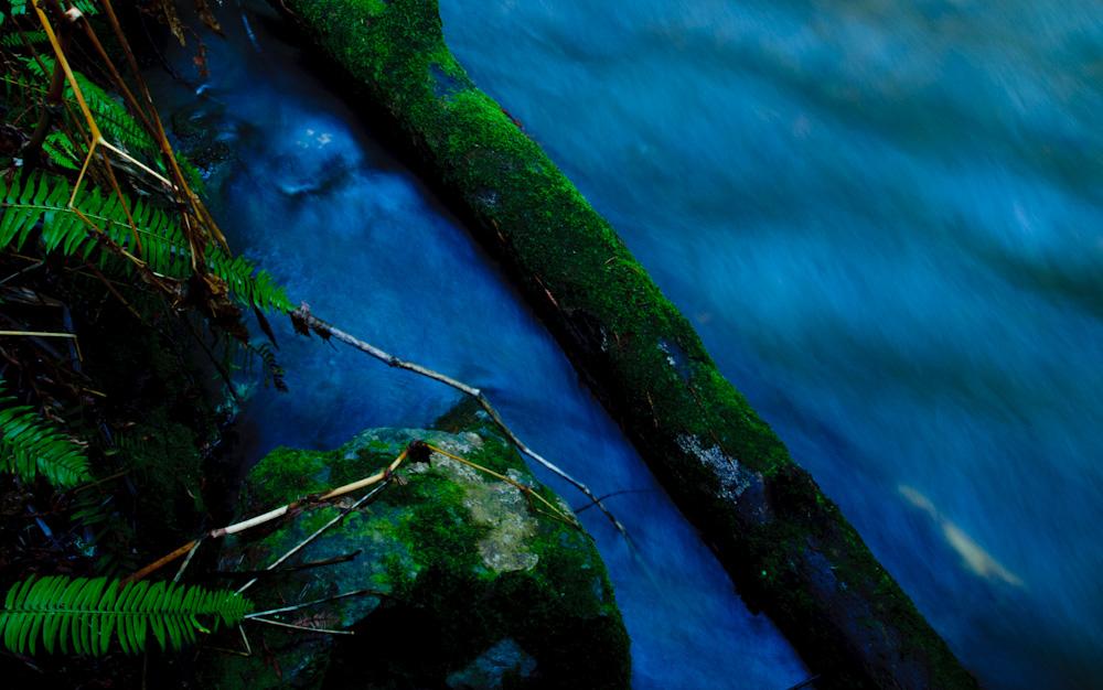 Redwood Creek, Muir Woods