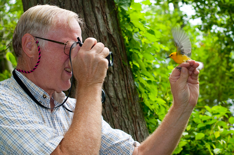 Sandy teliak photographs a prothonotary warbler for his records. Jug Bay, Maryland.