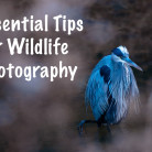 essential tips for wildlife photography