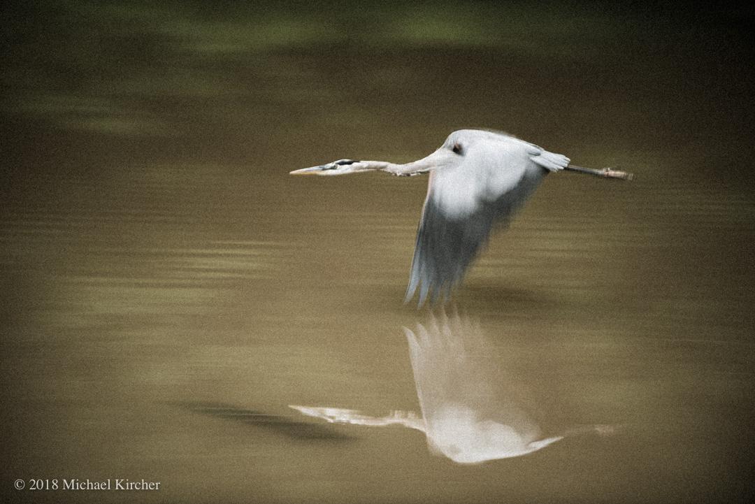 Low flying heron.