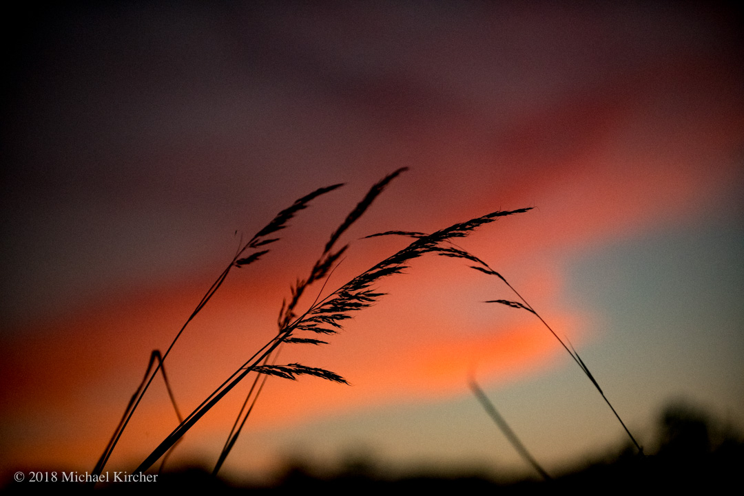 Orange sunset with silhouetted grasses at the C&O Canal in Maryland.